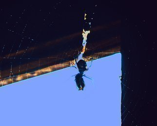 Artist: C. A. Hoffman - Title: Arachnid Art VII Falling Through The Cracks - Medium: Color Photograph - Year: 2009