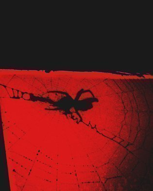 Artist: C. A. Hoffman - Title: Arachnid Art VI Red Dawn - Medium: Color Photograph - Year: 2009