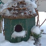 Birdies Frosted Home By C. A. Hoffman