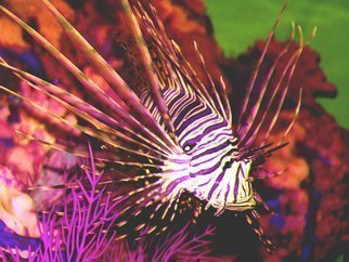 C. A. Hoffman Artwork Deadly Lionfish, 2009 Color Photograph, Abstract Landscape