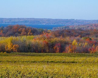 Color Photograph by C. A. Hoffman titled: Fall Color Vineyard, created in 2008