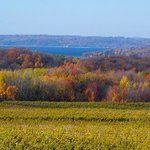Fall Color Vineyard, C. A. Hoffman