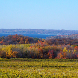 Fall Vineyard Landscape  By C. A. Hoffman