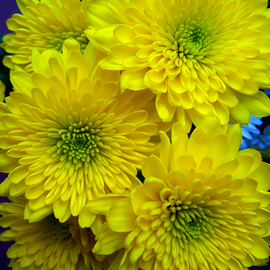 C. A. Hoffman Artwork Five Yellow Sisters, 2009 Color Photograph, Floral