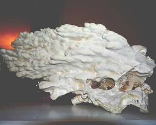 Artist: C. A. Hoffman - Title: Ghost Skull In Coral - Medium: Color Photograph - Year: 2009