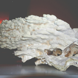 C. A. Hoffman: 'Ghost Skull In Coral', 2009 Color Photograph, Abstract. Artist Description:  This piece is from an original photo that has been digitally painted to create an original work of art.     ...