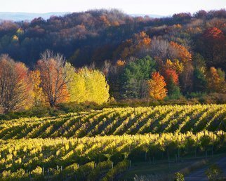 Artist: C. A. Hoffman - Title: Grapes of Fall - Medium: Color Photograph - Year: 2008