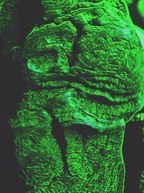 C. A. Hoffman Artwork Green Irish Mama, 2009 Color Photograph, Abstract Landscape