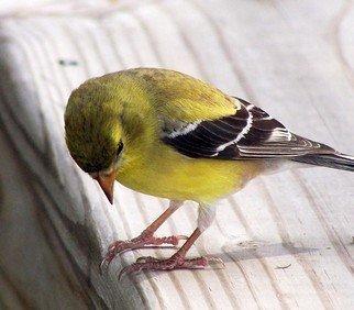 C. A. Hoffman Artwork Hmmmm , 2007 Hmmmm , Birds