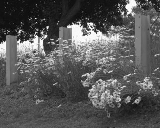 C. A. Hoffman Artwork In Daisy Heaven, 2010 Black and White Photograph, Landscape