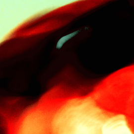C. A. Hoffman: 'Incognito III', 2009 Color Photograph, Abstract.