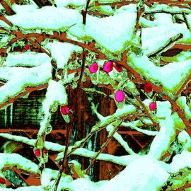 Japanese Pink Berries