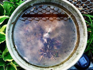 Color Photograph by C. A. Hoffman titled: Natures Sibyl Bowl, created in 2009