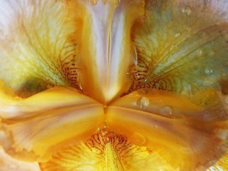 Color Photograph by C. A. Hoffman titled: Natures Yellow Luciousness, created in 2009