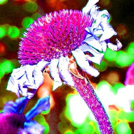 C. A. Hoffman: 'Neon Fucia Slide', 2007 Other Photography, Digital. Artist Description:  I  wanted to give the effect of an unatural look and feel.  This is actually a color picture that is enhanced several times over, then given the neon look.   The fact that the flower is leaning, really emphasizes the look and idea of dancing, and gives the picture ...