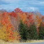 October Oranges, C. A. Hoffman