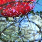 Red Reflection I By C. A. Hoffman