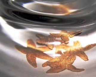 C. A. Hoffman Artwork Singularity IV Starfish, 2008 Singularity IV Starfish, Abstract Figurative