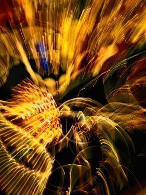 Artist: C. A. Hoffman - Title: String Theory Golden Fourth of July - Medium: Color Photograph - Year: 2009