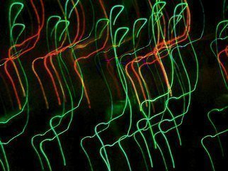 Artist: C. A. Hoffman - Title: String Theory Soon To Be Closed - Medium: Color Photograph - Year: 2009