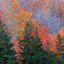 C. A. Hoffman: 'Transitions', 2008 Color Photograph, Landscape. Artist Description:  Beautiful October colors abound in this photo of natures transition into the oncoming winter. ...