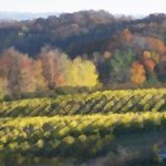 Vineyards For Monet By C. A. Hoffman