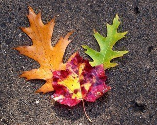 Color Photograph by C. A. Hoffman titled: We Three Leaves, created in 2008