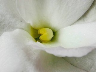 C. A. Hoffman Artwork White Secret Luciousness, 2009 Color Photograph, Floral