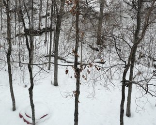 Artist: C. A. Hoffman - Title: White Sunday In the Forest - Medium: Color Photograph - Year: 2010