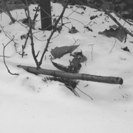 C. A. Hoffman: 'Winters Sniper', 2009 Black and White Photograph, Landscape. Artist Description:                This is an original photo that has been digitally painted to create an original piece of art.        This s an original photo that has been digitally- painted to create an original piece of art.       ...
