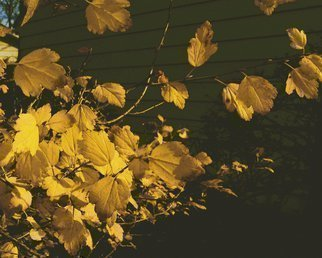 Artist: C. A. Hoffman - Title: Yellow Fall Confetti - Medium: Color Photograph - Year: 2010