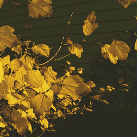Yellow Fall Confetti By C. A. Hoffman