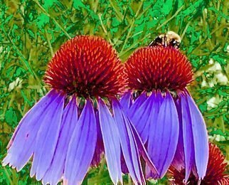 C. A. Hoffman: 'bee on purple power', 2019 Color Photograph, Floral. This is an original color photograph that has been digitally altered to create a new piece of art. ...