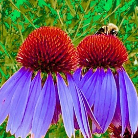 C. A. Hoffman: 'bee on purple power', 2019 Color Photograph, Floral. Artist Description: This is an original color photograph that has been digitally altered to create a new piece of art. ...