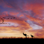 sunset outback kangaroo By Jean Dominique  Martin