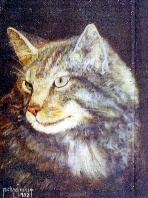 Cat Canvas Picture