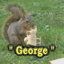 Michael Pickett: 'George', 2009 Other Photography, Animals. Artist Description:   Photo From Video,