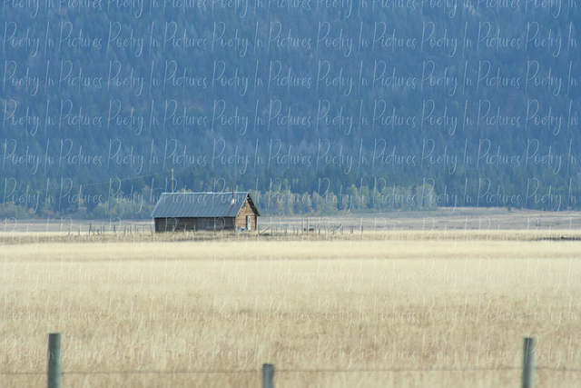Tracy Brown  'Cabin In The Wheat Field', created in 2009, Original Photography Color.