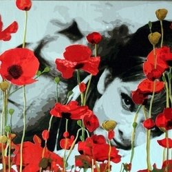 , Audrey In Poppies, Famous People, Request Price