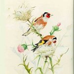 Goldfinch , Roger Farr