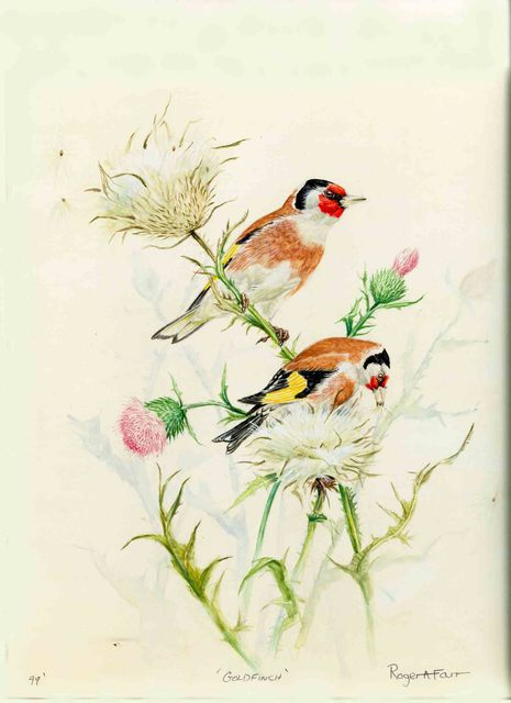 Artist Roger Farr. 'Goldfinch ' Artwork Image, Created in 1993, Original Painting Acrylic. #art #artist