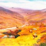 Highland Wildlife By Roger Farr