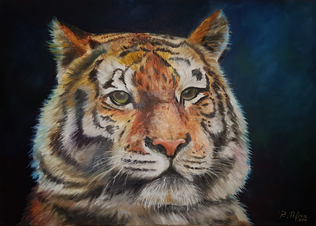 Raluca Tifrea: tiger, 2016 Oil Painting