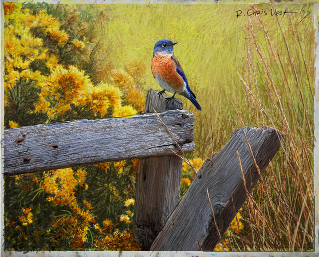 R Christopher Vest  'Rail And Rabbitbrush, Late Summer Western Bluebird', created in 2007, Original Computer Art.