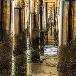 under the boardwalk By Dick Drechsler