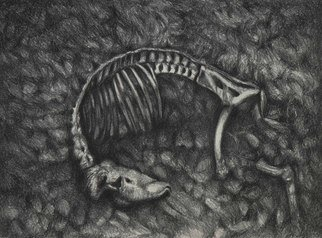 Rachel E Heberling: 'Full Circle', 2013 Lithograph, Animals.  Stone lithograph of deer skeleton   ...