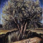 Olive Tree By Riccardo Rossati