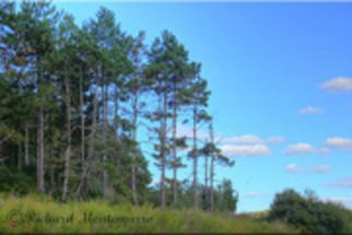 Richard Montemurro: 'Autumn Sky at Round Pond Reservoir', 2008 Color Photograph, Landscape.   Trees stand tall against an Autumn Sky at the Pond.  ...