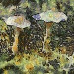 SHROOMS By Richard Montemurro