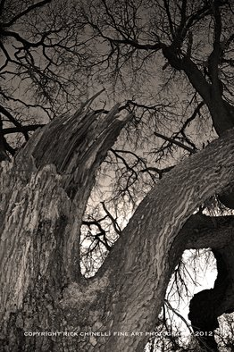 Rick Chinelli: 'Refugio Busted Oak sepia 5984', 2015 Other Photography, Trees.